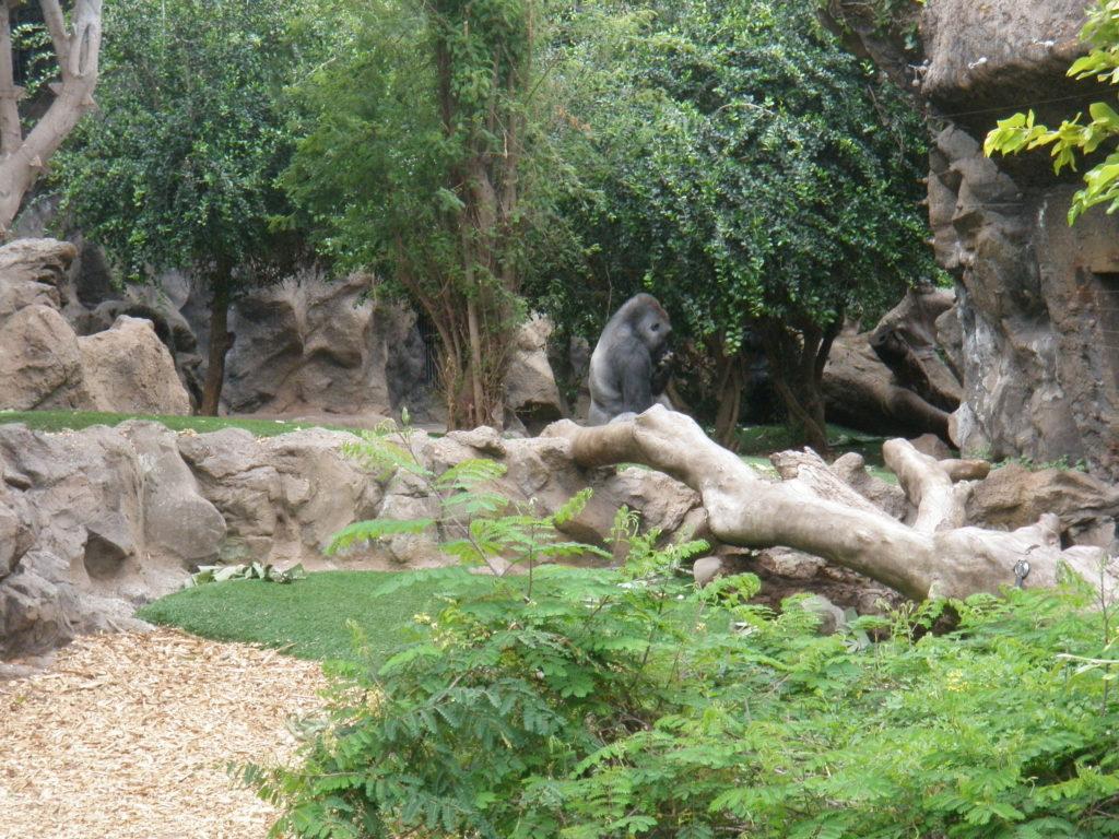 Горилла среди деревьев