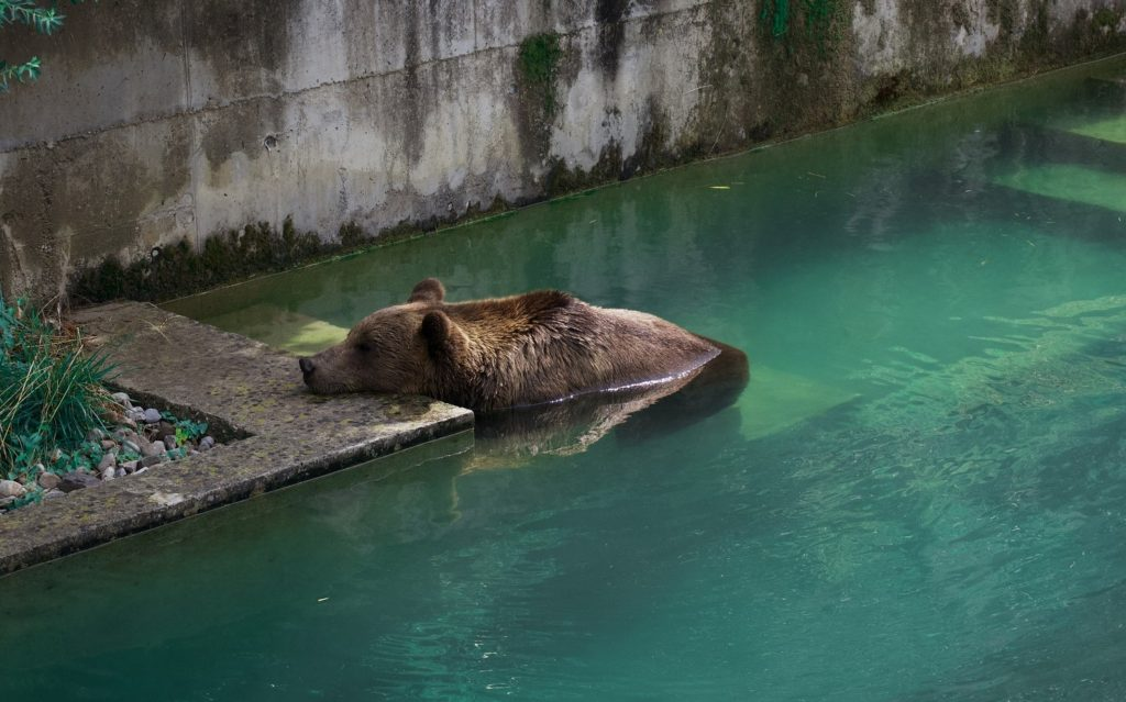 Медведь - символ города Берн